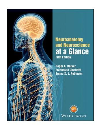 Neuroanatomy and...